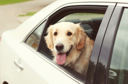The Ultimate Guide for Traveling with Pets This Holiday Season
