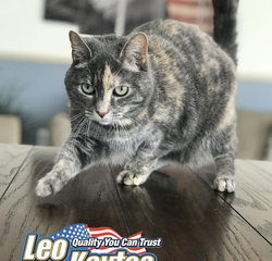 Mascot & Troublemaker Shelby The Cat in Mascots at Leo Kaytes Ford