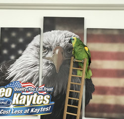 Sales Floor Entertainment Sparky The Bird in Mascots at Leo Kaytes Ford