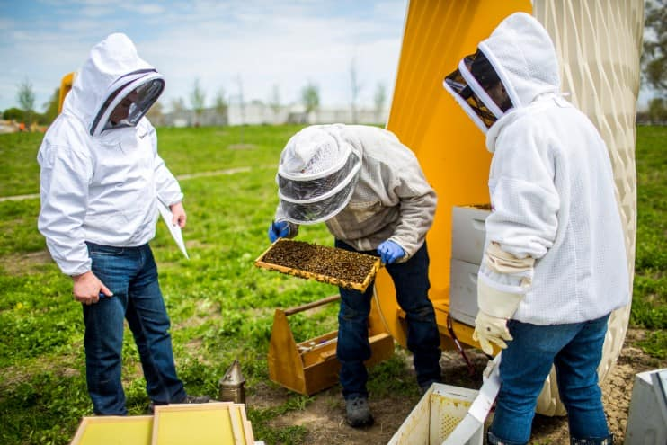 Cormac Wright and Adam Ingrao inspect bee hives at Ford World Headquarters