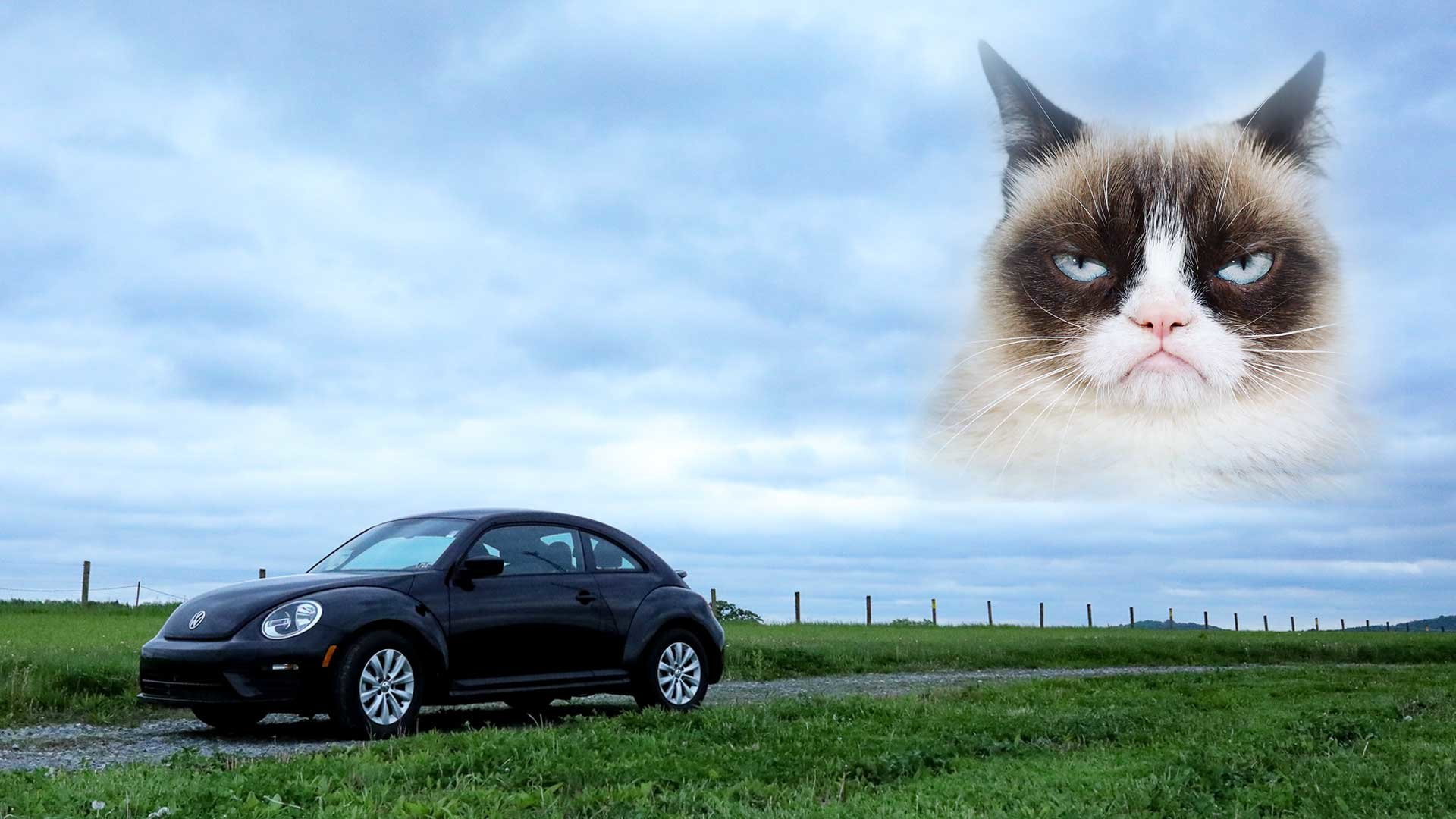 diehl auto butler volkswagen beetle grumpy cat eulogy parody tardar sauce cat lover animal lover
